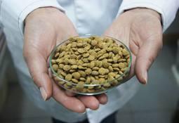 UACh abrió Programa de Magíster en Nutrición Acuícola