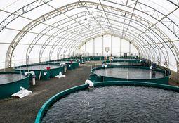 Solcellepanel skal bidra til vekst hos fisk