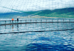Iceland salmon farmer's shares 'oversubscribed multiple times'