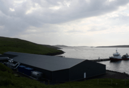 Reduced hatchery volume producing better smolts for Grieg Shetland