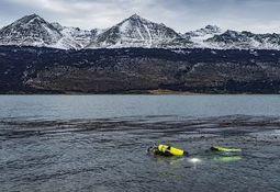 Cambio global provoca incertidumbre en sistema marino Patagónico