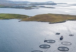 Sea lice levels and low UK prices hurt Grieg Shetland