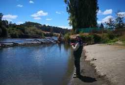 Tribunal Ambiental autoriza detención parcial de Piscicultura Cocule