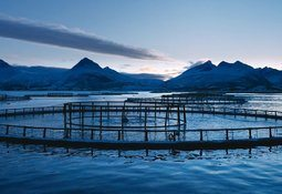 Cermaq sells Arctic salmon's slow-grown qualities