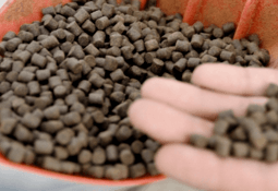 Scientists offer alternative to normal fishmeal production