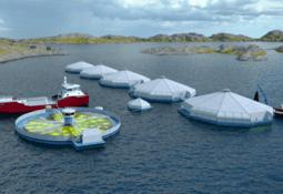 Noruega: Rechazan centro salmonicultor vinculado a biorreactor
