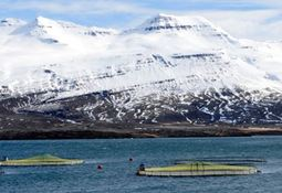 Icelandic salmon farmer set to triple production