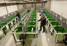 All type havbruk inn i Fiskehelse på Barentswatch