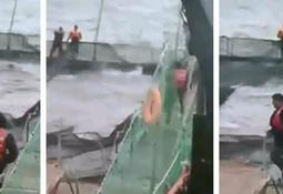 Sernapesca denuncia agresiones a lobo marino en centro de salmón