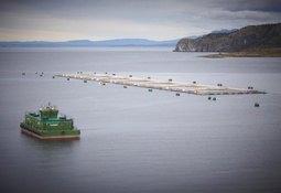 Gobierno reforzará fiscalización a industria del salmón
