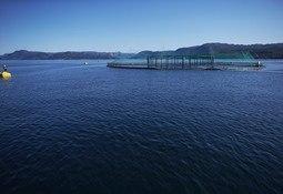 Dispensasjoner fra fiskehelseregelverket under koronautbruddet