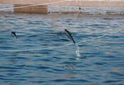 Quieren limitar a 10 años tiempo de entrega de concesiones acuícolas