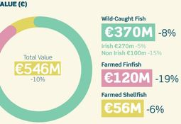 Lower salmon harvest limits Irish seafood earnings