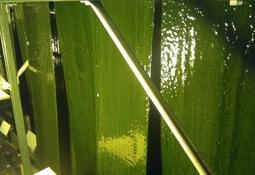 """Nuevo biofiltro """"verde"""" para sistemas de recirculación"""