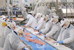 Conforman nueva federación de trabajadores del salmón
