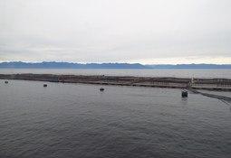 Chilenos publican revisión del estado actual de la acuicultura nacional