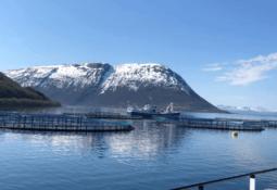 Algae kill 10,000 tonnes of fish worth £56m in Norway