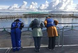 Japanere vil lage fisk med Øyvind Blom