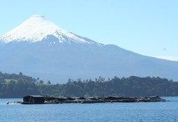 En Chile: Gobierno establece restricciones a la esmoltificación de salmón