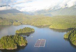 Cermaq operations in British Columbia  tackle sea lice