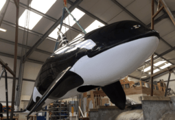 Shock and orca: Mowi uses fake whale to scare seals