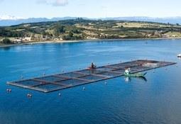 Puerto Varas: Realizarán jornada sobre salmonicultura sustentable