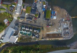 Bedre år for Astafjord Smolt