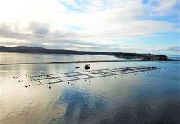 Aquatem construirá nuevas jaulas reforzadas en Isla de Chiloé