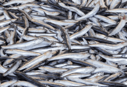 Skretting sticks with 'selective' forage fish use