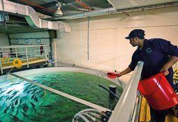 Hendrix Genetics apoya cultivo de salmón en Dubái