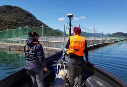 En Aysén: Revelan avances de investigaciones por maltratos a lobos marinos
