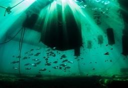 Invitan a concurso internacional de fotografía de acuicultura