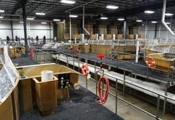 AquaBounty gets go-ahead to issue 30 million shares