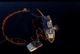 Undersøker fiskevelferd ved termisk behandling