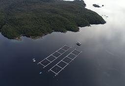 Desarrollan software de digitalización que promete revolucionar la acuicultura