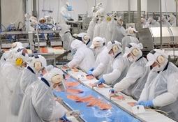 Productividad de Salmones Blumar afectada por dos enfermedades