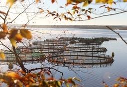 New regulations for Nova Scotia's aquaculture industry
