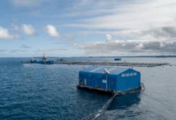 Salmones Camanchaca toma medidas para enfrentar algas nocivas