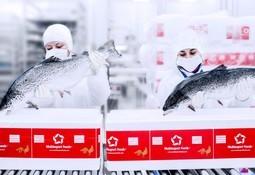 Multiexport Foods baja 42,5% sus ingresos en el segundo trimestre