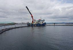 Noruega: Rechazan red de energía eléctrica para inactivar piojos de salmón