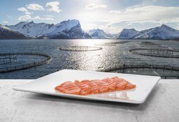 Bumper month for Norwegian salmon exports