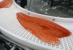 Describen relación microbiota intestinal-pigmentación del filete en salmón Atlántico