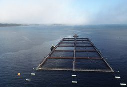 ¿Quién debe fiscalizar a los certificadores de estructuras de cultivo de salmón?