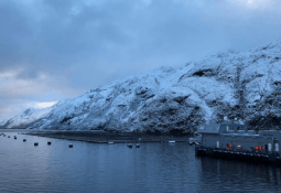 Traerán sistema de ensilaje más grande para la salmonicultura chilena