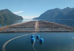 Oceana: Información sobre uso de antibióticos en salmón es de interés público