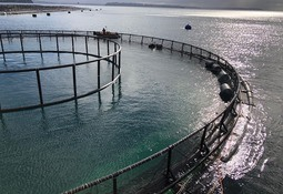 Chile: Inicia operaciones primera balsa jaula sumergible para acuicultura oceánica