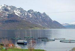 Advierten que Noruega debe mejorar control en comercio de peces vivos de cultivo