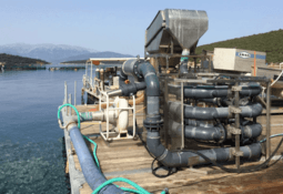 Aturdidor eléctrico para salmones es finalista en premio de innovación acuícola