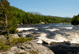 Cooke helps wild salmon restoration in Maine