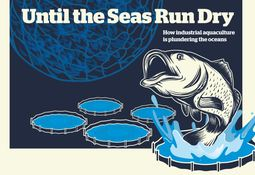 We don't use unsustainable fish, insist salmon farmers